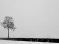 pays-d-auge-sous-la-neige-nb