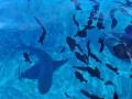 polynesie-lagonmer-0009